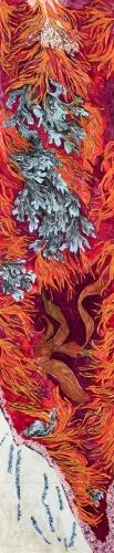 algues marion 1.jpg