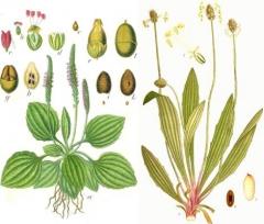 plantes 1.jpg